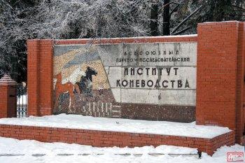 Дивово, Рязанская область, институт коневодства