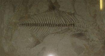 А вот и один из обитателей океана Тетис (фото автора).
