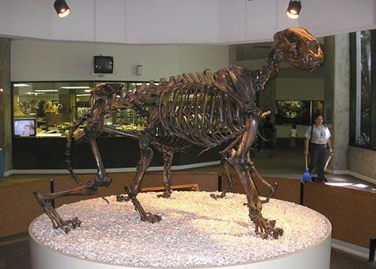 Скелет льва