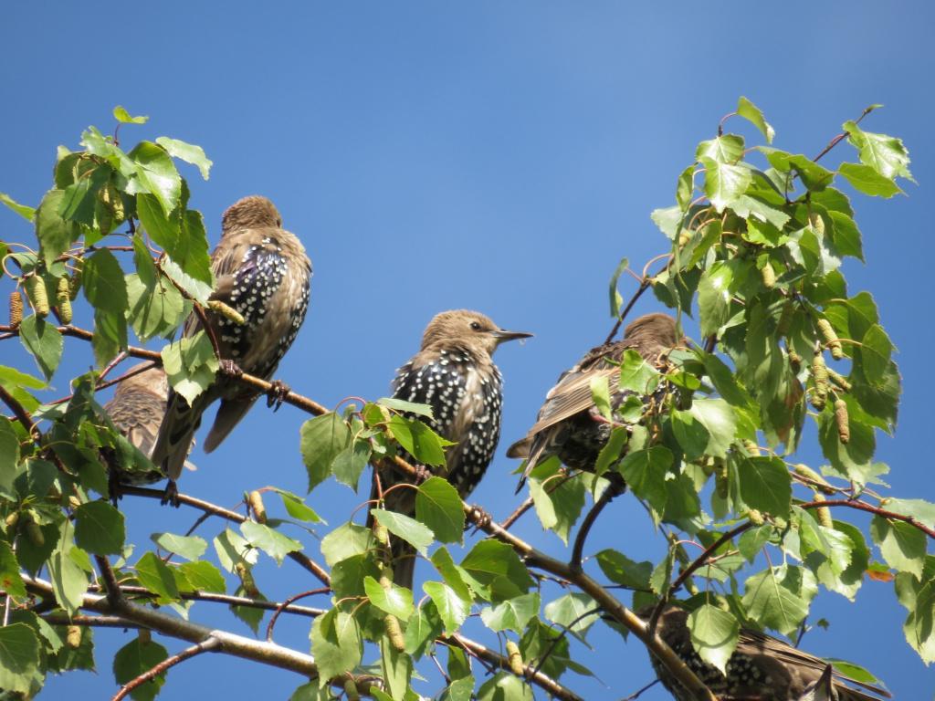 птицы рязанской области фото с названиями элементов