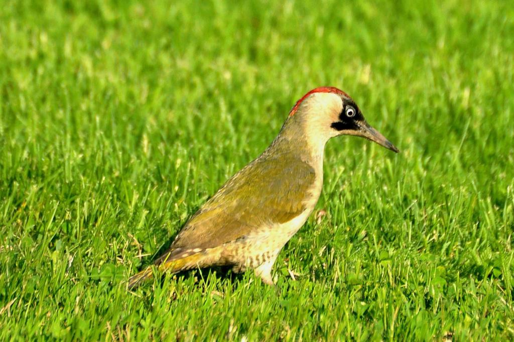как птицы рязанской области фото с названиями вот арианна