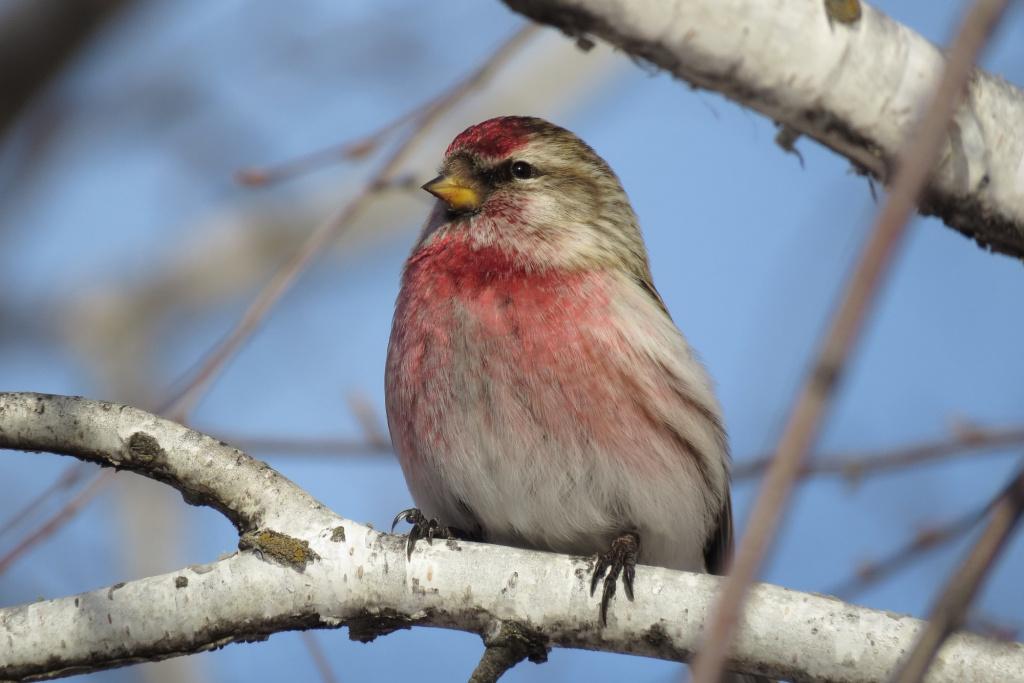 достаточно птицы рязанской области фото с названиями емкость, указанная