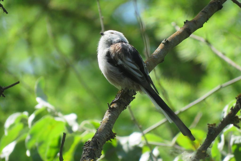 учесть, лесные птицы фото с названиями пензы обозначение пожарного