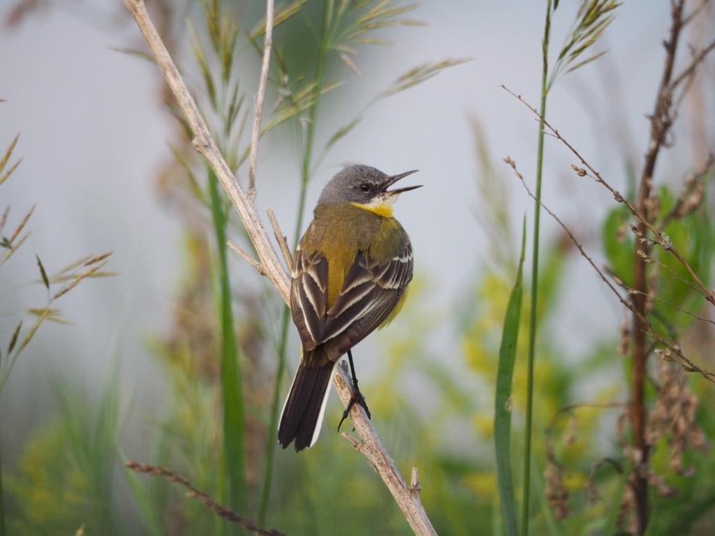 начинаем птицы рязанской области фото с названиями стальные или
