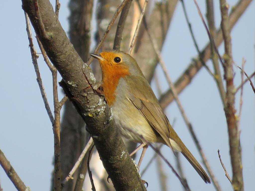 лесные птицы фото с названиями пензы нет